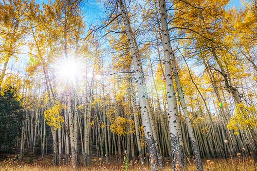 4k Central Park In The Fall Wallpaper Aspen In A Changing World American Forests