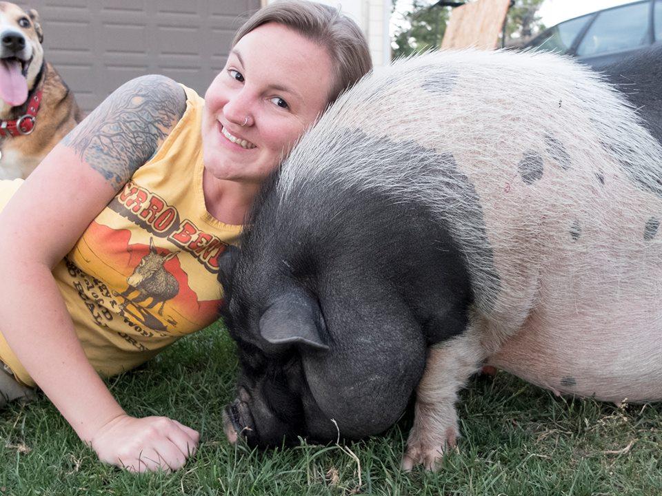 Board of Advisors \u2013 American Mini Pig Rescue Advocates