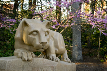 Panoramic Wallpaper Fall Nittany Lion Shrine Photos By William Ames