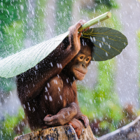 SONY WORLD PHOTOGRAPHY AWARDS 2015 OUTSTANDING OPEN COMPETITION ENTRIES