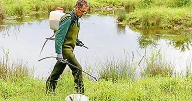 Brigade verte : La chasse aux moustiques en zones humides