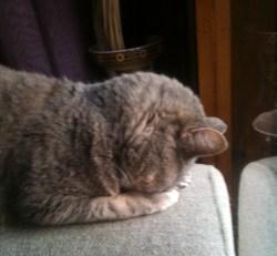 Small Of Cat Head Pressing
