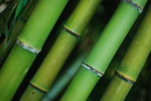 jpn_bamboo