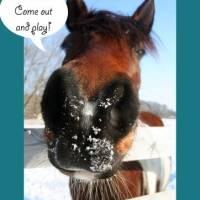 Ponies + Dachshund + Snow = Fun