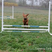 DIY: Build Your Own Agility Jumps
