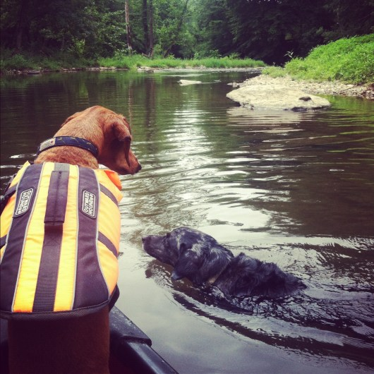 Ammo the Dachshund - Canoeing down the Brandywine River