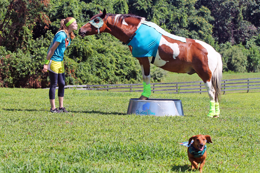 Ammo the Dachshund Super Hero and his Super Hero Pony