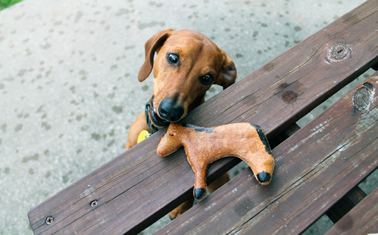 Ammo the Dachshund - Pony Cookie - Howl Naturale