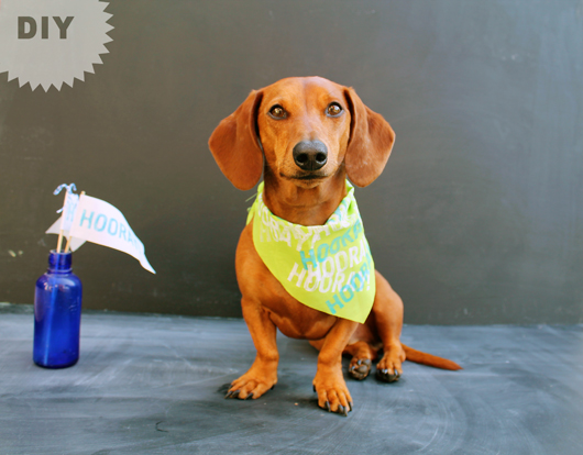 Birthday Week // DIY Pet Birthday Bandana // Ammo the Dachshund