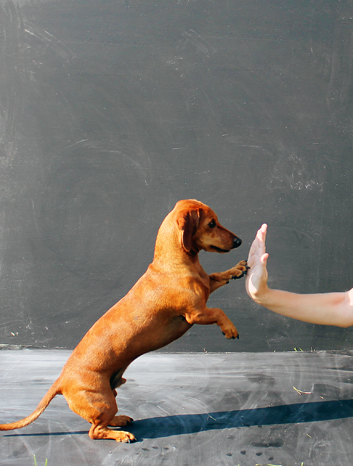 how to train your dog to give their paw