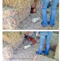 I went on a Barn Hunt