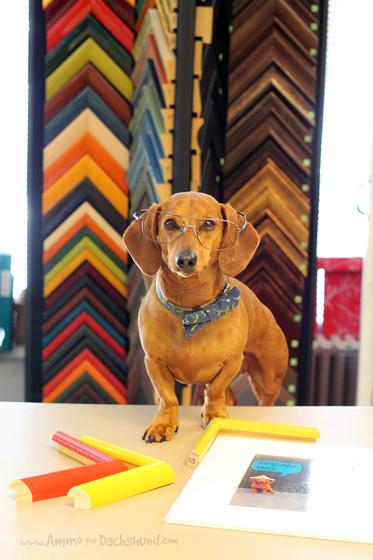 Take Your Dog to Work Day // Custom Framing // Ammo the Dachshund