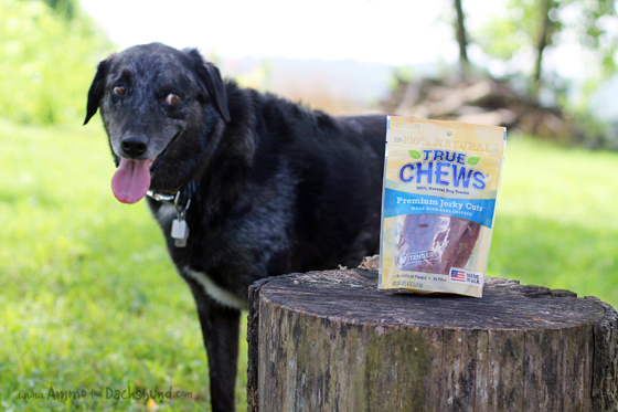 Product Review: True Chews Premium Jerky from Chewy.com // Ammo the Dachshund
