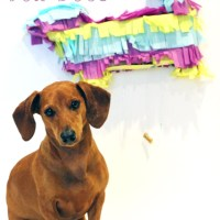 Birthday Week: DIY Dachshund Pinata for your Dog