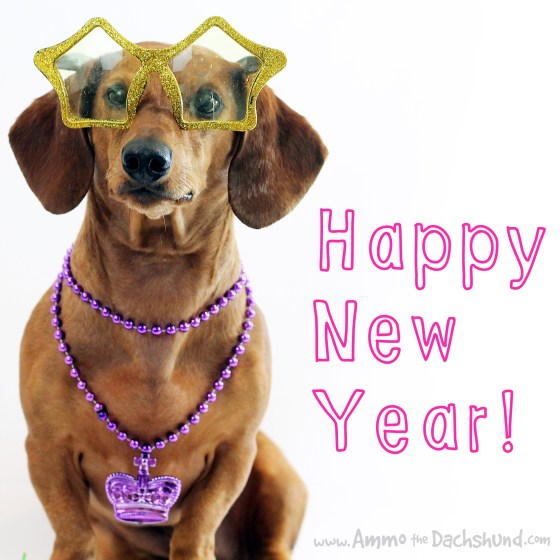 Happy New Year // Ammo the Dachshund
