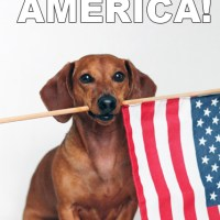 What to Do on the 4th of July