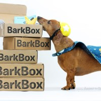 Birthday Week: Enter to Win A Barkbox Subscription