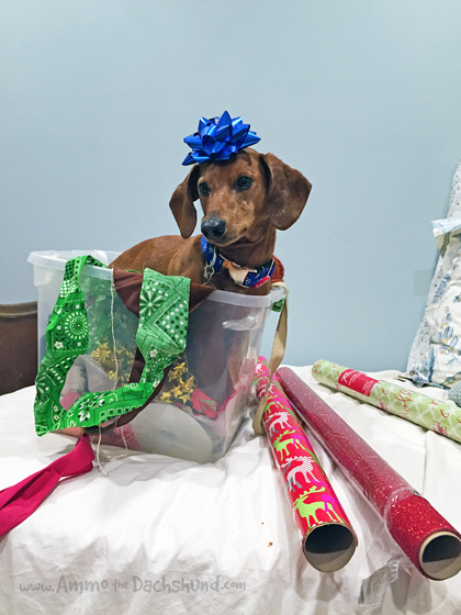 Dog Days of Cheer! Holiday Gift Wrapping