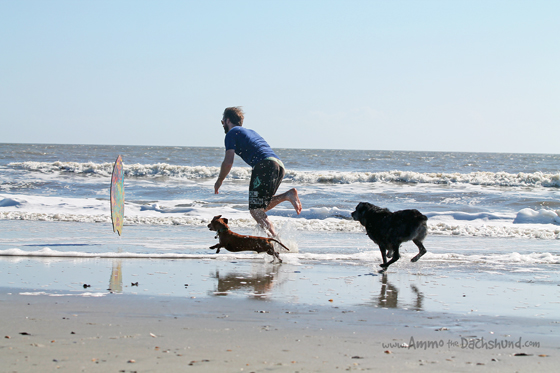 Thanksgiving Road Trip: Skim Boarding Dogs