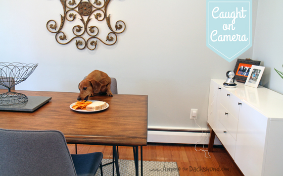 Naught Dog Caught on Camera with Vimtag + A Giveaway