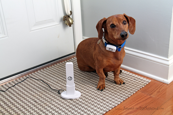 Iota GPS Pet Tracker with No Monthly Fees + A Giveaway