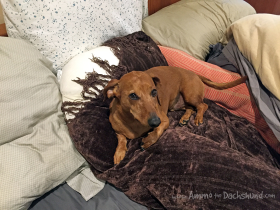 A DIY Solution for Sleeping Comfortably with your Dog