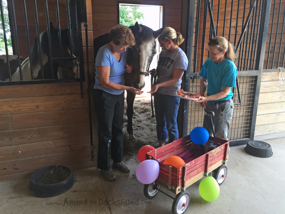 Throwing a party for a horse