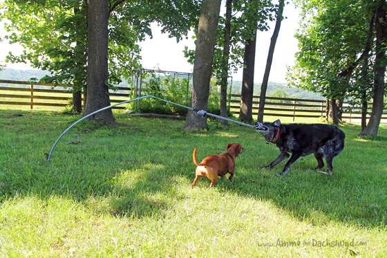 A Tether Tug Toy for Tough Dogs + A Giveaway #ad