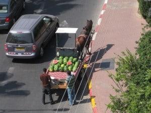 Watermelon Horse