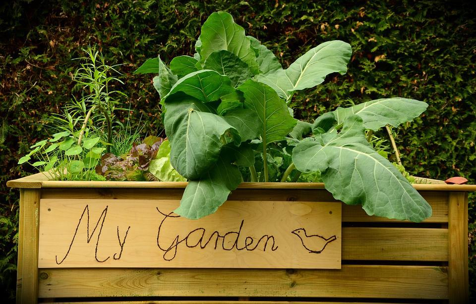 5 Beginner Tips For Starting A Container Garden
