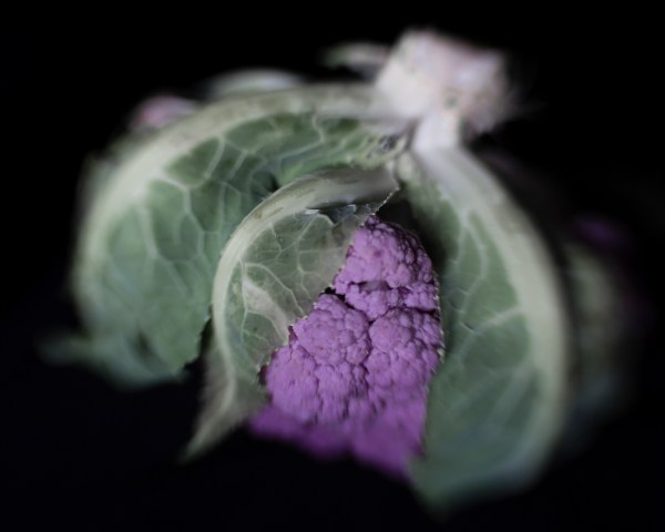 Photographic image of a purple cauliflower with leaves. Cauliflower fresh from the farm.