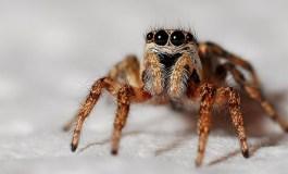 Arañas en todas partes