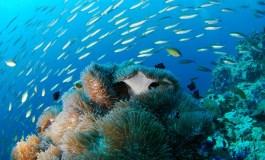 Un eco en El Pacífico