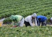 Fedeagro espera respuesta sobre plan para enfrentar crisis alimentaria