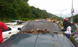 Una persona herida al caer un árbol sobre su vehículo en la Cota Mil