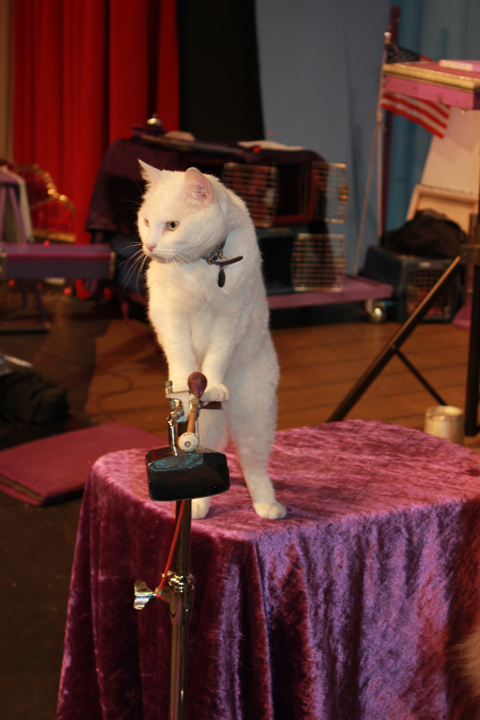 Tuna, on cowbell. (Photo by Barry Jawer)