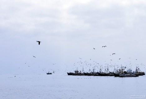 Сонмы птиц над возвращающимися с уловом судами.