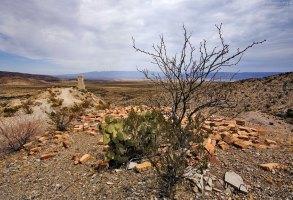 Кусты креозота на старом руднике Mariscal Mine.