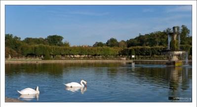 Пара белоснежных лебедей в пруду за дворцом.