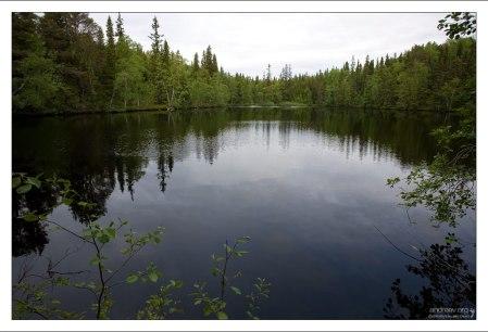 Лесное озеро у подножия ботанического сада.
