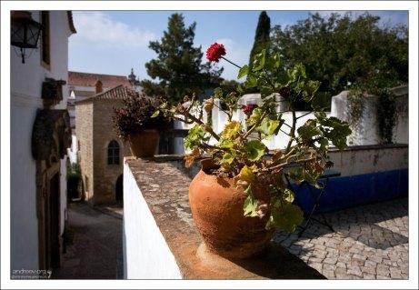 Герань в горшках - самое распространенное растение на улицах.