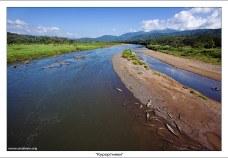 """Крокодилы греются на отмели в реке Rio Grande de Tarcoles. Из словаря Ожегова: """"Курортник"""" - человек, лечащийся, отдахающий на курорте. По ним и видно..."""