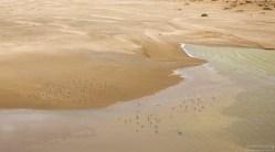 Одна из прибрежных лагун с птицами.