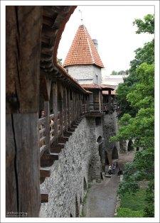 Кафе с видом на Старый город из Девичьей башни (Neitsitorn).