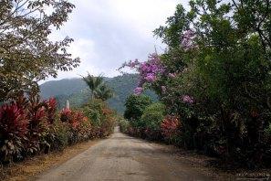 Дорога к озеру Cachi через плантации кофе и тропических растений.
