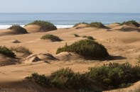 Дюны, поросшие кустарником, на самом берегу Атлантики, в национальном парке Сус-Масса.