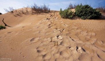 Следы на дюнах.