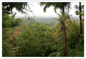 Тропический лес до горизонта. Заповедник Flower Forest.