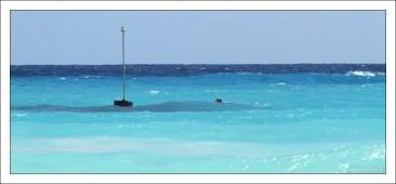 Молочно-голубая вода Барбадоса.