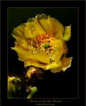 """""""Унесенный ветром"""". Этот симпатичный цветок грушевидного кактуса произрастал в пустыне Чихуахуан, в национальном парке «Биг Бенд» на границе с Мексикой. Во время съемок поднялся такой сильный ветер, что многие цветы не выдержали, и сорвались с насиженных мест. Так появилось название фотографии."""